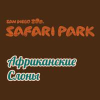 Африканские слоны. Онлайн камера в зоопарке San Diego