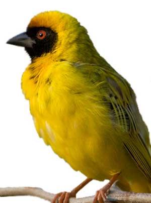 Умеют ли птицы… учиться?