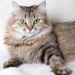 История одомашнивания кошки