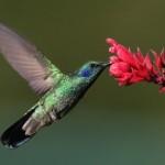 Птицы- рекордсмены