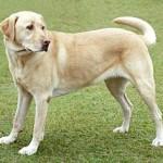 О ценности овощей в рационе собаки