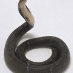 Китайская кобра