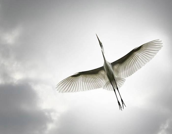 Что служит ориентиром перелетных птиц?