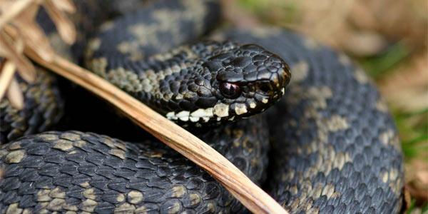 Какие виды змей бывают - 1