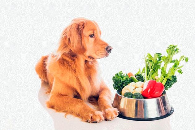 Одними из полезных овощей для собаки считается морковка, тыква и кабачок