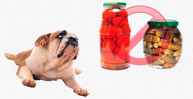 Категорически запрещено давать собакам любые маринованные овощи