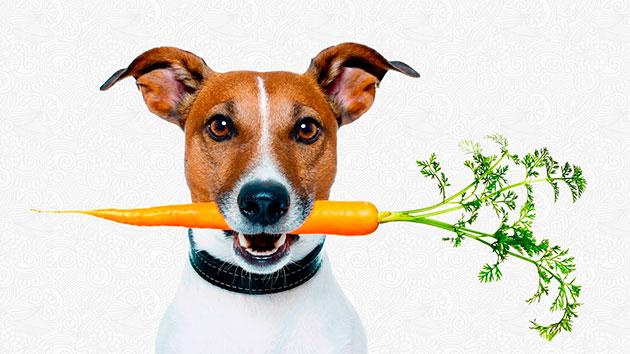 Овощи в рационе собаки