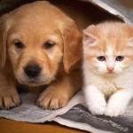 Почему собаки не любят кошек
