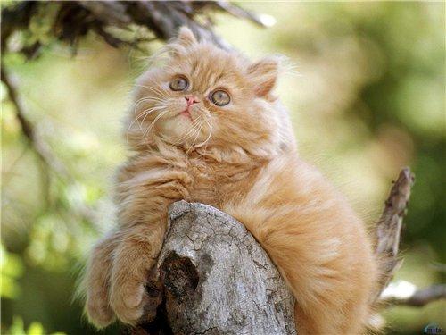 Особенности координации движения кошек