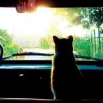 Путешествие с кошкой (правила перевозки)