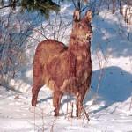 Редкие и исчезающие виды животных