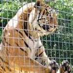 Зоопарки – жизнь за гранью зла