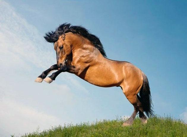 Мустанг – дикая лошадь