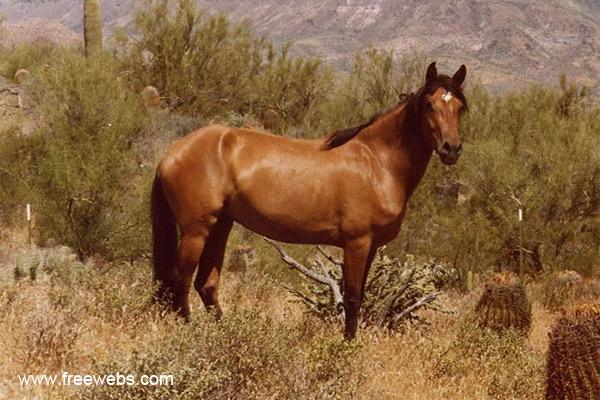 Мустанг – лошадь на свободе