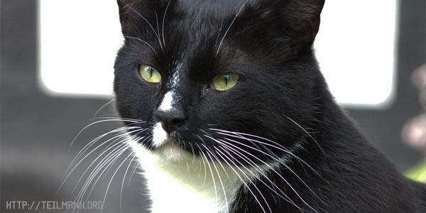 Зачем кошке усы. Может ли кошка прожить без усов