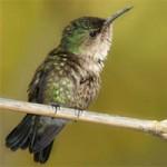 Самые маленькие птички