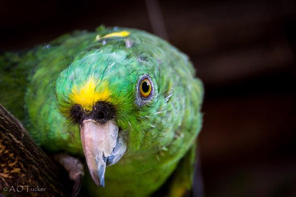 Сколько лет живут попугаи?