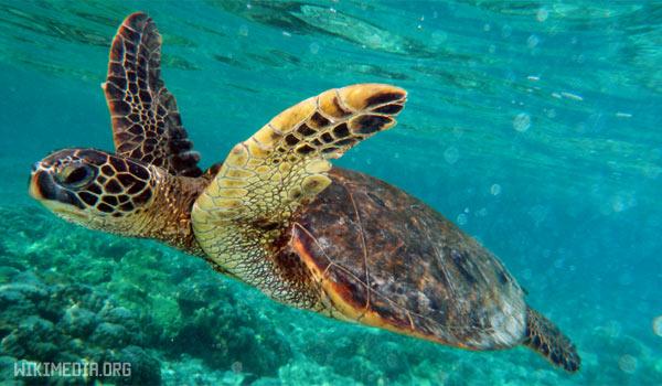 Топ 5 животных-долгожителей — Черепахи