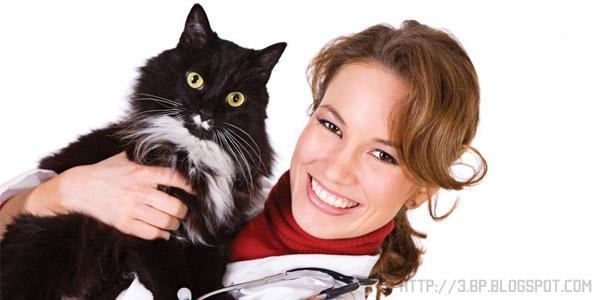 Распространенные заболевания у кошек