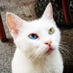 heterochromia-main
