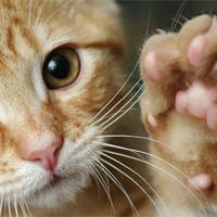 Дрессировка кошек – запаситесь терпением