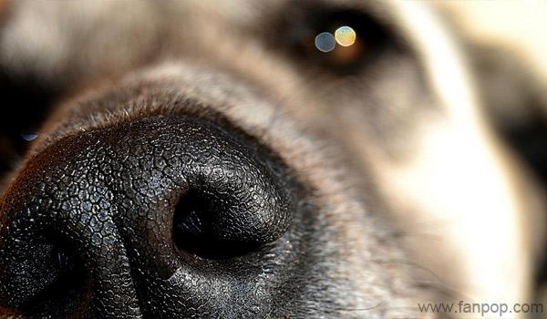 Как обоняние животных помогает человеку