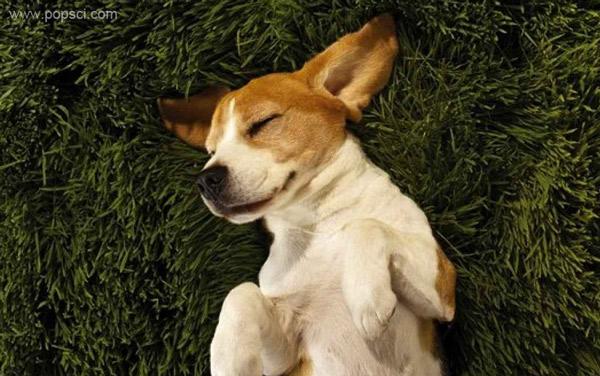Видят ли животные сны