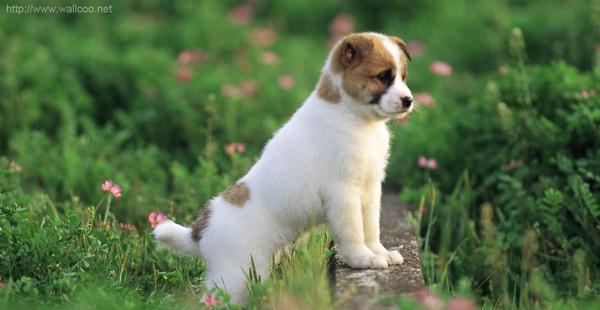 Клички собак или как назвать щенка