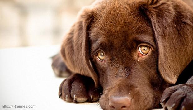Клички для собак или как назвать щенка