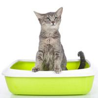 Лечение кошки: кал с кровью