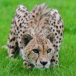 Самые быстрые животные