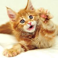 Лечение кошками. Какая порода, какие болезни лечит