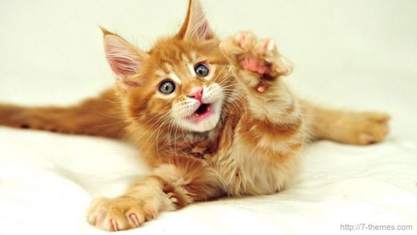Лечение кошками - Фелинотерепия
