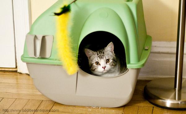 Как приучить дворовую кошку к туалету