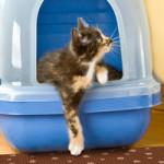 Как приучить дворовую кошку к домашнему туалету