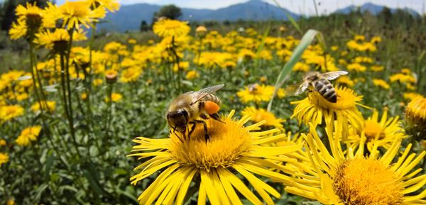 Пчелы. Разведение в неволе. Пчелиный мед