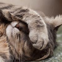 Простуда кошек. Симптомы и лечение