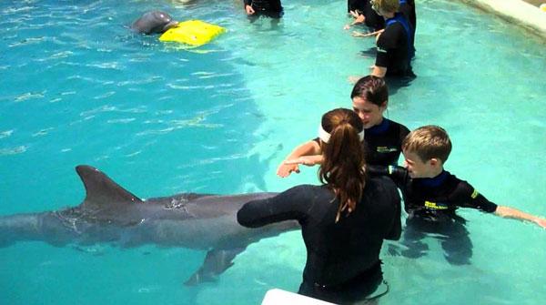 Дельфины - водные млекопитающие