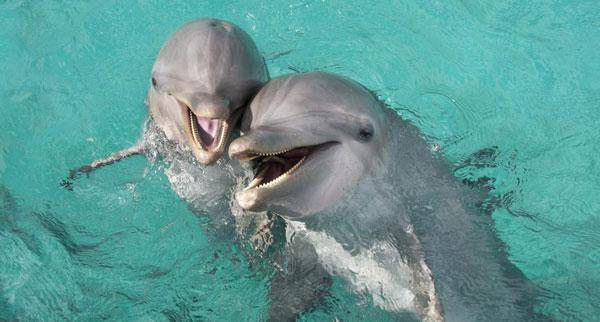 Дельфины - водные животные