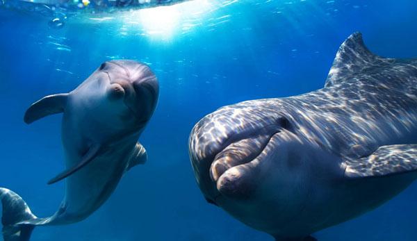 Дельфины — водные млекопитающие