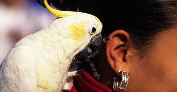 Как назвать попугая - какое имя выбрать