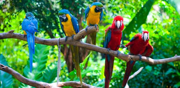 Как назвать попугая - советы и рекомендации