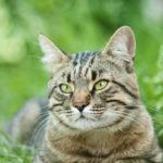 Сколько лет живут кошки