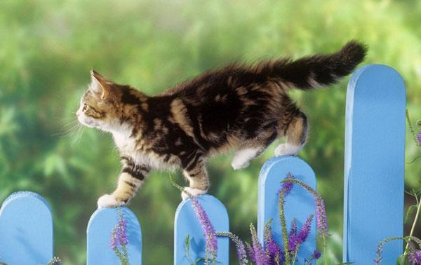 Выгул домашней кошки - советы и рекомендации