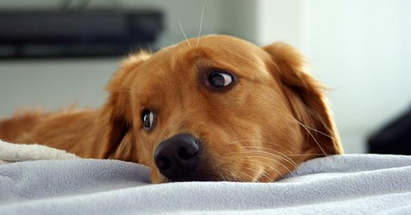 Аллергия у собак: виды, симптомы, лечение, профилактика