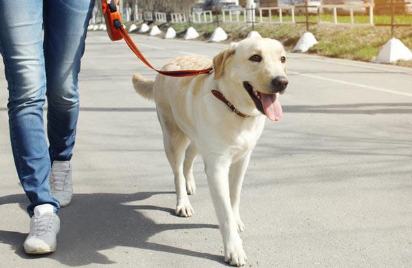 Как отучить собаку гадить дома - советы и рекомендации