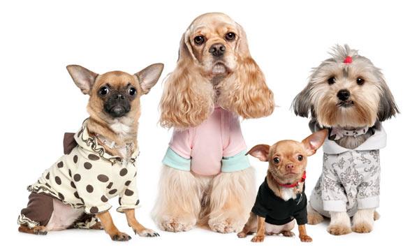 Выбор одежды для собаки