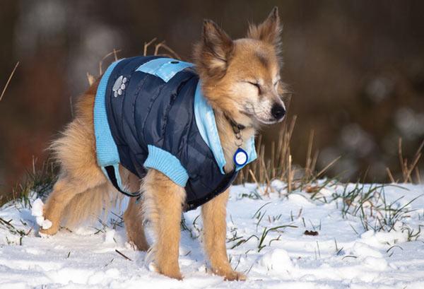Выбор одежды для собаки - советы и рекомендации
