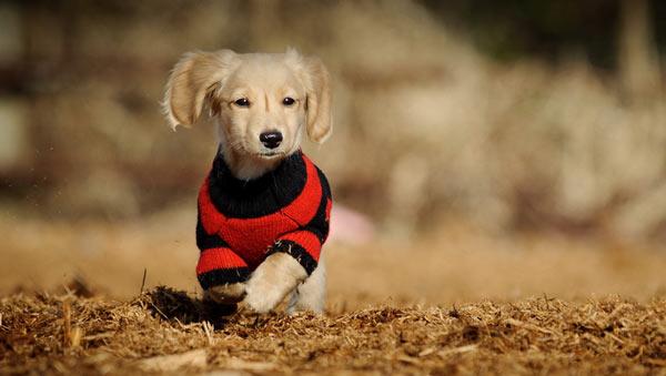 Одежда для собаки - виды одежды, как выбрать, уход за одеждой