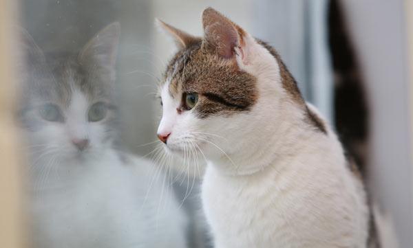 Зачем стерилизовать кошку